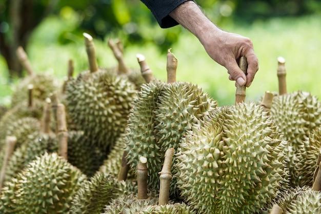 Klanten kiezen ervoor om durian te kopen bij tuiniers in chanthaburi.