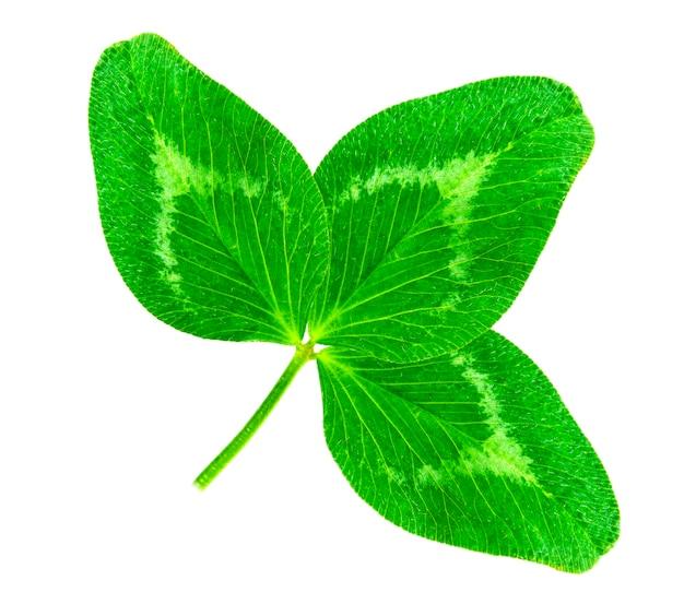 Klaver groen hartvormig blad