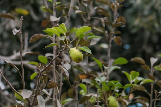 Klein avocadofruit aan je plant