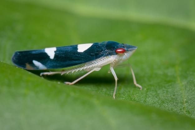 Klein blauw en roodogig insect, neergestreken op een boomblad Premium Foto