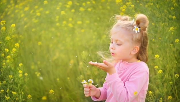 Klein blond meisje blaast kamilleblaadjes uit de palm van haar hand op de achtergrond van een veld field