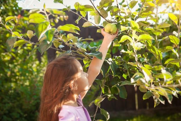 Klein donkerbruin meisje dat groene appel plukt in de tuin