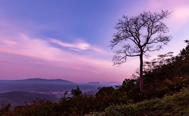 Klein dorp in het midden van het bos en het ochtendlicht