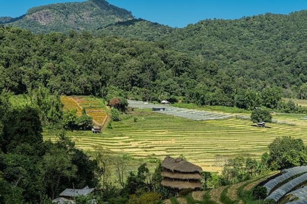 Klein dorp midden in de jungle met terrasvormige velden