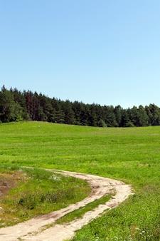 Klein gedeelte van een landelijke weg naar het bos door een veld met groen gras