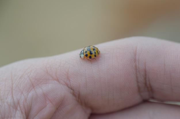 Klein gekleurd lieveheersbeestje in één hand