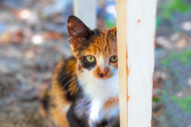 Klein gembervlek katje verstopte zich achter een stoelpoot, huisdierkarakter.