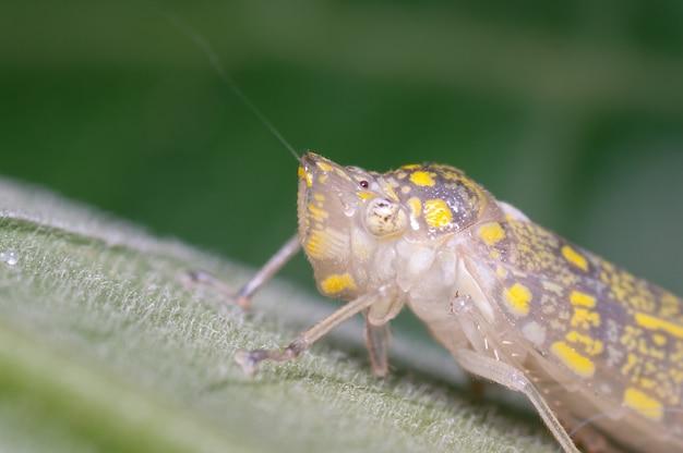 Klein insect dat net zijn beschermende omhulsel heeft afgeworpen