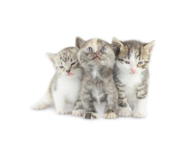 Klein katje drie op wit wordt geïsoleerd dat