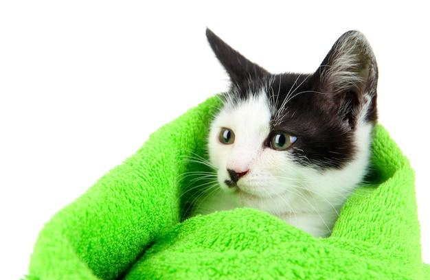 Klein katje in groene handdoek op wit wordt geïsoleerd