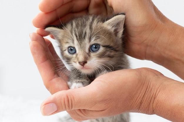 Klein katje in menselijke handen. dieren verzorgen