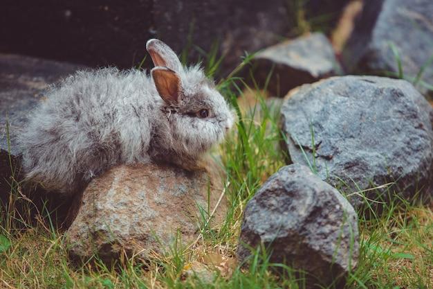 Klein konijntje.