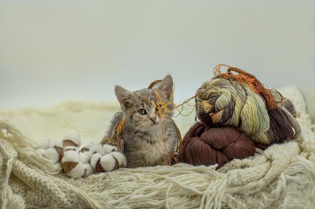 Klein leuk katje met kleurrijke bal van draden om hem heen