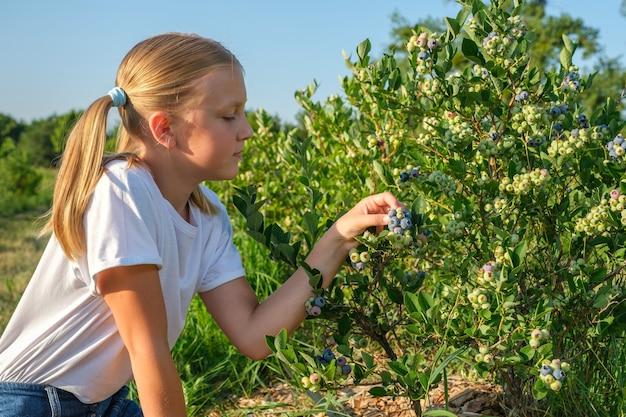 Klein meisje bosbessen plukken op biologische boerderij