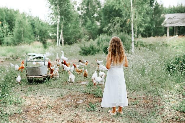 Klein meisje kippen voederen op de boerderij