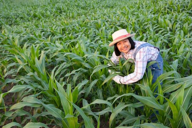 Klein meisje knuffel en zie product tracking in maïsveld. ze heeft een frisse glimlach en geluk in de avond. landbouw avond concept.