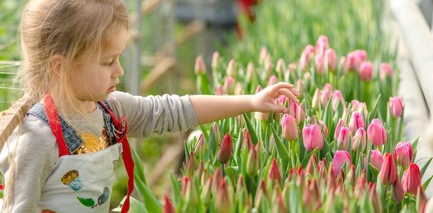 Klein meisje plukt tulpen in de kas in het voorjaar.