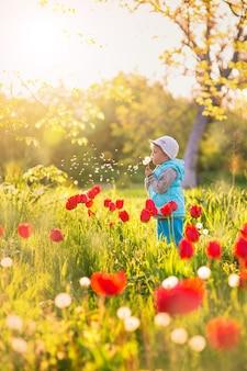 Klein meisje waait op een paardebloem in een veld met groen gras en bloeiende tulpen bij zonsondergang