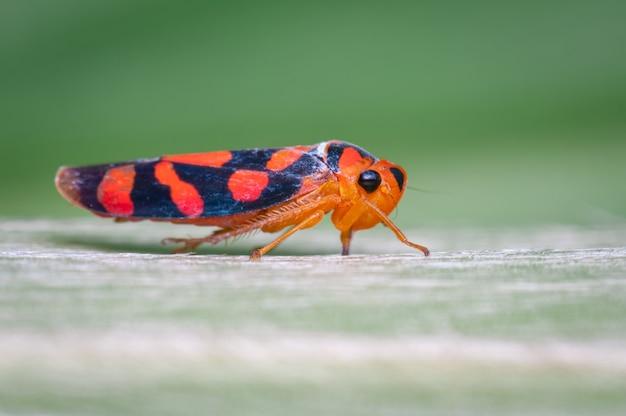 Klein rood insect dat op een groen blad wordt neergestreken