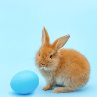 Klein rood pluizig konijn, met blauw geschilderd ei op blauwe oppervlakte. paasvakantie concept