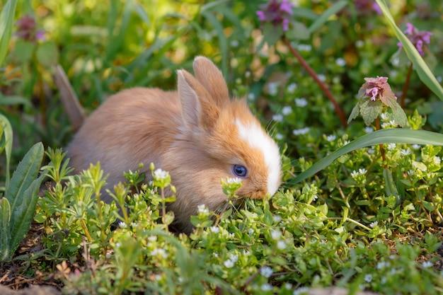 Klein schattig konijn eet gras buiten