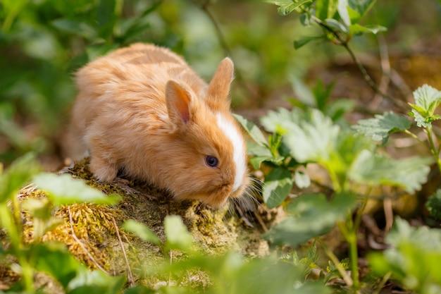 Klein schattig konijn in het gras