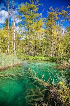 Klein transparant meer in het plitvice national park, kroatië