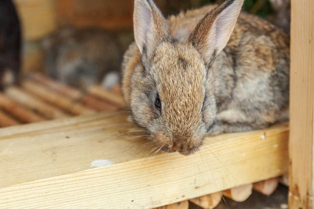 Klein voedend bruin konijn op dierlijk landbouwbedrijf in konijnehok