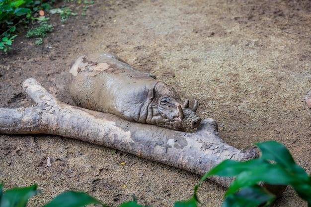 Klein vuil wrattenzwijn dat dichtbij de boom ligt