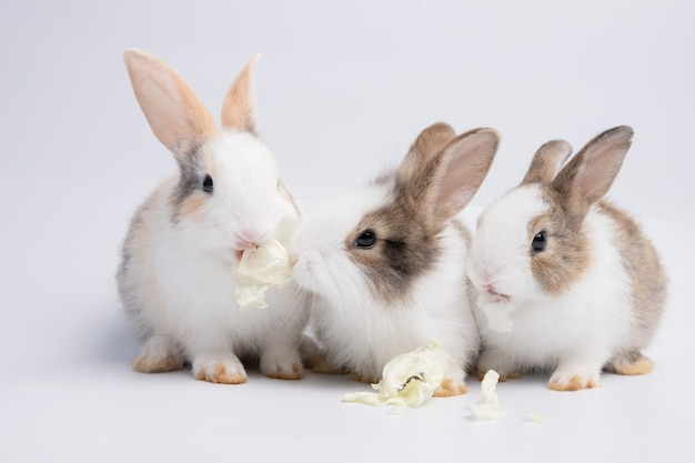 Klein wit en bruin konijn dat kool eet op een geïsoleerde witte of oudroze achtergrond in de studio zijn kleine zoogdieren in de familie