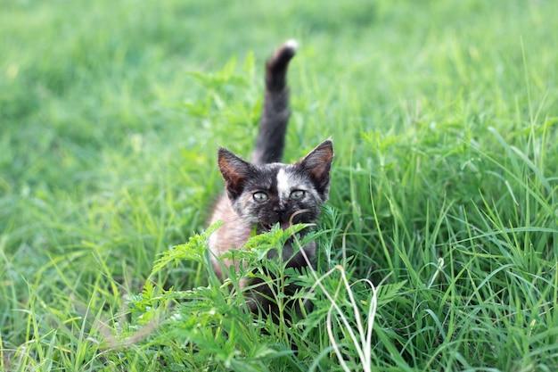 Klein zwart gevlekt katje in het groene gras. favoriete huisdieren.