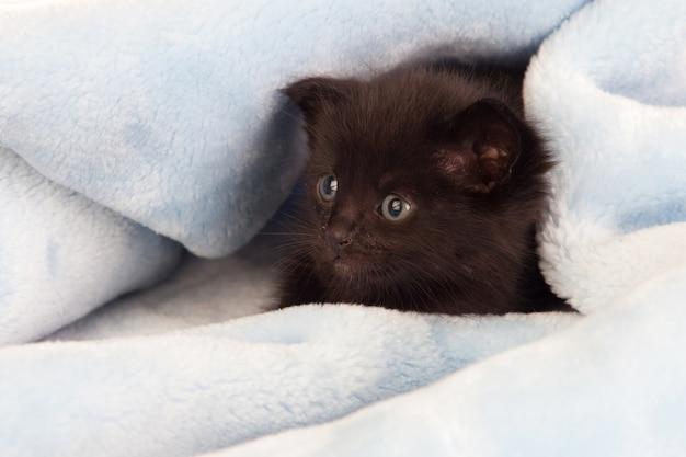 Klein zwart katje die op een deken liggen