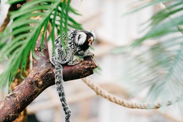 Kleine aap ondersoort in dierentuin.