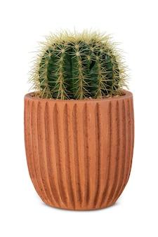 Kleine barrelcactus in een terracotta pot