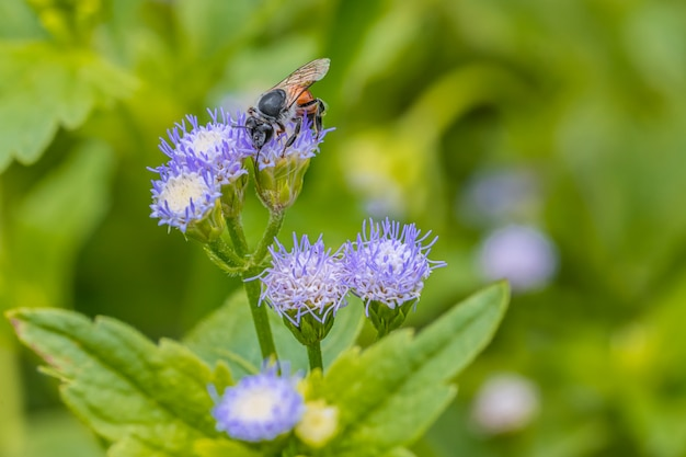 Kleine bij op de violette bloem