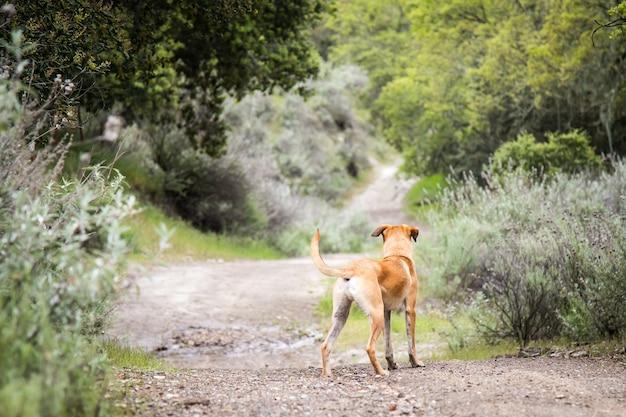 Kleine black mouth cur-hond die midden op een onverharde weg staat, omringd door bomen en struiken