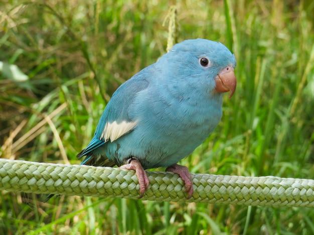 Kleine blauwe vogel staande op een touw
