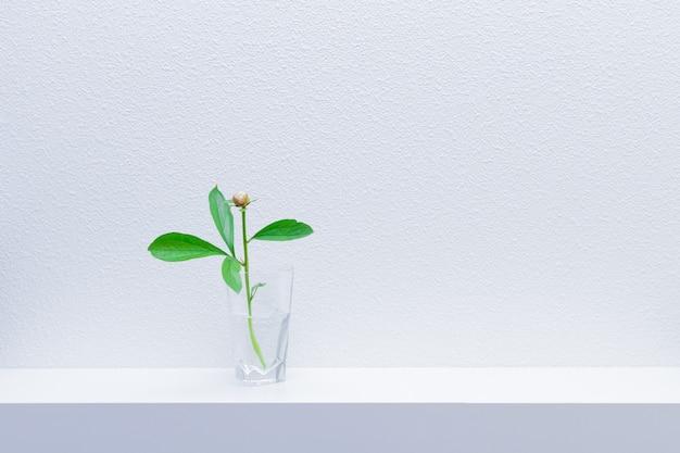 Kleine bloem van een pioenroos in een vaas met water