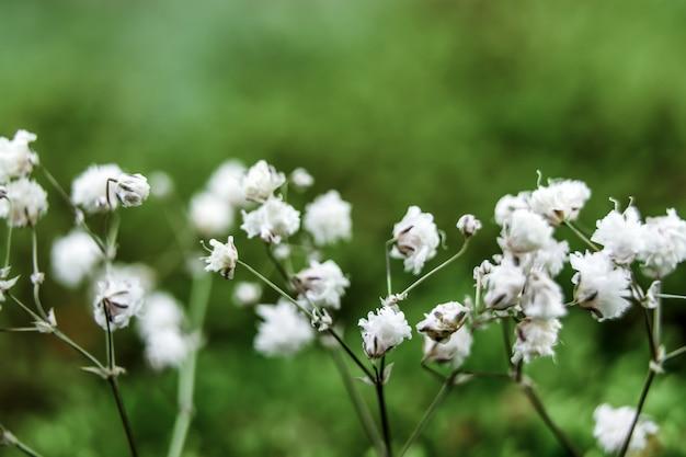 Kleine bloemen op een zachte achtergrond in de open lucht