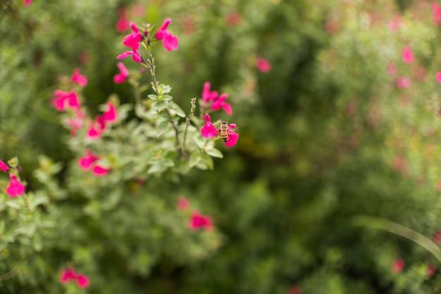Kleine bloemen op struik in tuin