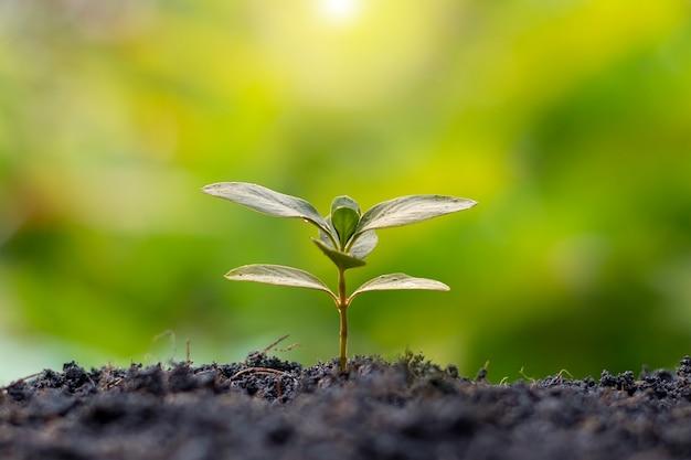 Kleine bomen met groene bladeren natuurlijke groei en zonlicht het concept van landbouw