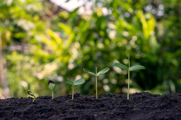 Kleine bomen van verschillende grootte die groeien op een groen achtergrondconcept van zorg voor het milieu en de wereldmilieudag.