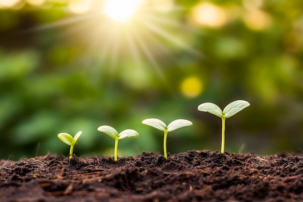 Kleine bomen van verschillende grootte groeien op een groene achtergrond