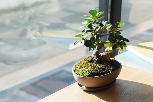 Kleine bonsai op houten tafel bij raam.