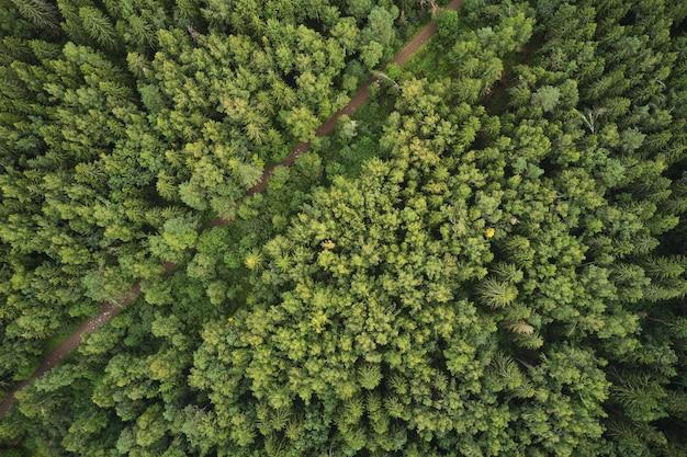 Kleine bosweg in de zomer, uitzicht van bovenaf