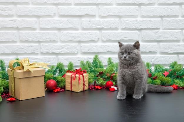 Kleine britse kitten op het witte oppervlak met kerstcadeautjes