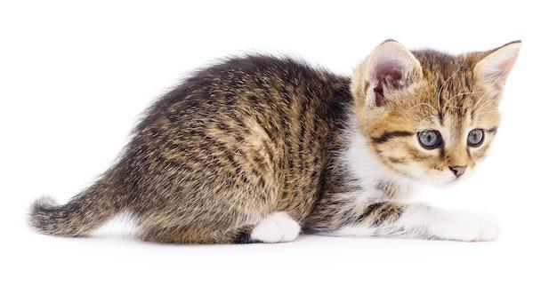 Kleine bruine kitten geïsoleerd