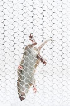 Kleine bruine rat (rattus norvegicus) die de metaalkooi beklimt.