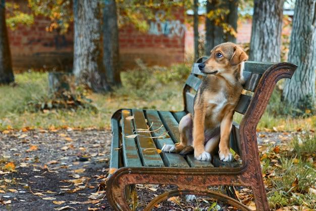 Kleine bruine verdwaalde hond op straat