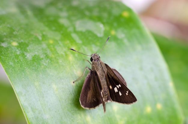 Kleine bruine vlinder op groen blad